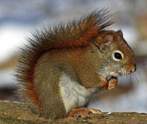 Eichhörnchen Quiz